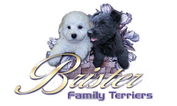 Scottish Terrier Puppies For Sale in Texas | Brister Family